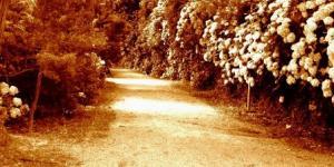 O gosto dos caminhos recomeçados