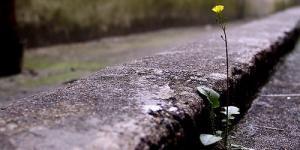 A flor do mundo é a santidade
