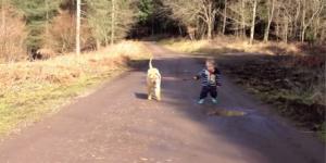 A criança, o cão e a poça d'água