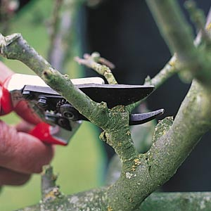 Pruning_Fruit_Trees.jpg